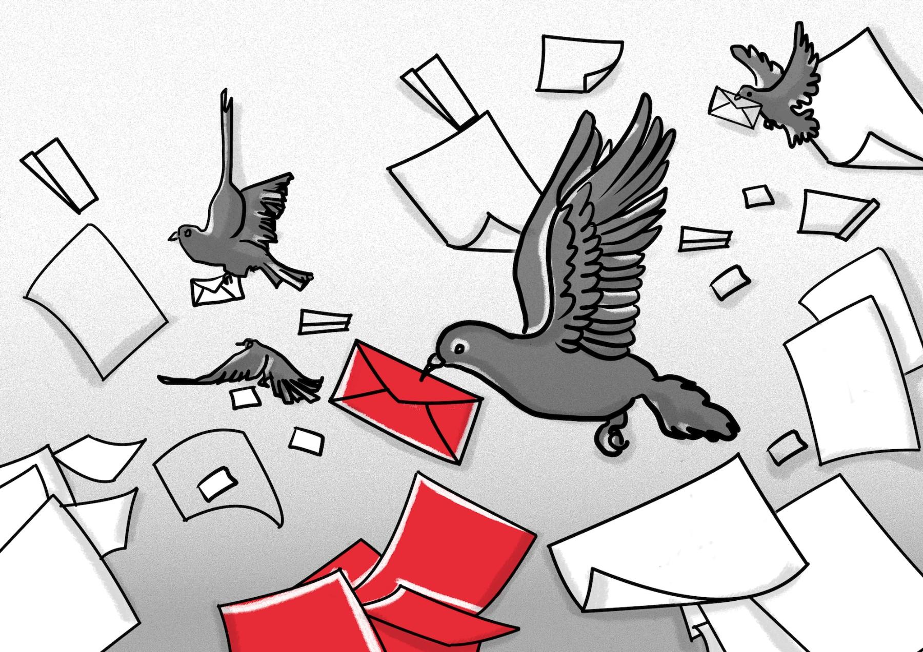 skiz pigeon SMALL